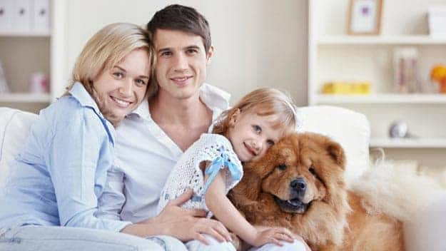 Wills & Trusts dog-young-family Direct Wills Sudbury